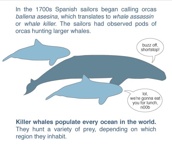 kill those whales!